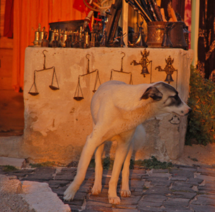 Foto: Hund - Kappadokien in der Türkei