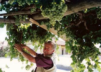 Weinanbau in Kappadokien